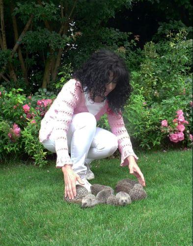 Una domenica speciale - Riccio in giardino ...